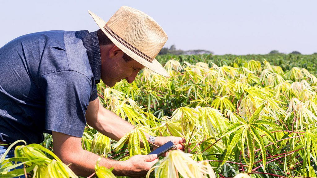 innovacion-tecnologica-agrotecnologia